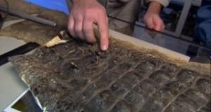 Нашествие гигантских питонов (2005) — 22 Апреля 2012 — ТВ-передачи ОНЛАЙН — Хорошие новости про животных